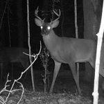 Nočni ciljnici za bolji pregled po mraku
